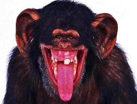 Mutant Monkey from Mars